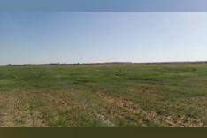 اراضي زراعيه للبيع