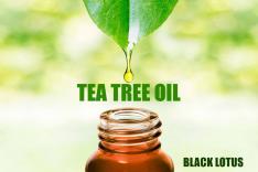 TEA TREE OIL - زيت شجرة الشاى