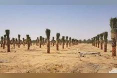 ارض للاستثمار الزراعي والداجني والانتاج الحيواني فرصه لن تعوض 420 فدان